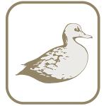 Marca pato